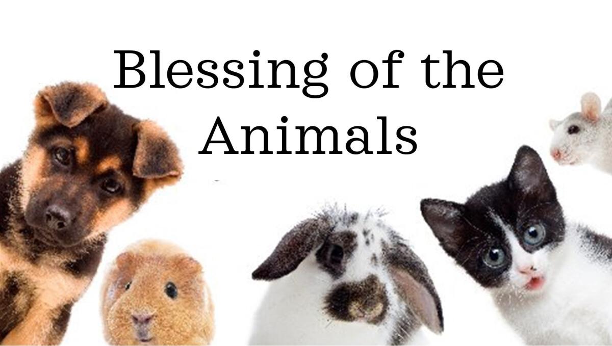 Animal Blessing